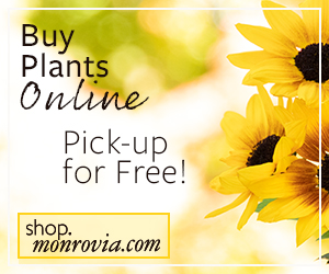 "Three yellow sunflowers next to text that reads ""Buy Plants Online"" and ""Pick-up for Free!"""